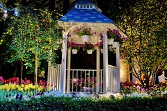 P A V I L I O N (NadzNidzPhotography) Tags: nadznidzphotography garden flower pavilion ornaments nature naturephotography architecture white blue lights light yellow red tulip