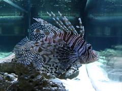 IMG_0244 (Alejandro Perez M.) Tags: medellin parqueexplora acuario