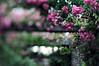 rosiger HBW (Frau Koriander) Tags: park parkrosenhöhe rosenhöhe darmstadt deutschland germany hessen nikond300s lensbaby lensbabycomposerpro lensbabycomposerproedge80 lensbabyedge80 edge80 80mm rosen roses hbw happybokehwednesday bokeh bokehwednesday dof pergola tilt tiltshift nature natur flowers flower rosarium heiner rheinmaingebiet südhessen rosenblüte rose rosarosen rosé pinkroses äste zweige rosenzweig outdoor green rosenblüten rosenblätter blooming blühenderosen blühend bloomingflowers blümchen romantic rosenbogen rosepetals pink colour colourfull farbig steinern rosenbögen flora garten garden parc botanischergarten hesse schärfentiefe blurry depthoffield depth hessendarmstadt wedding kulisse hochzeit dreamy dream rosentraum