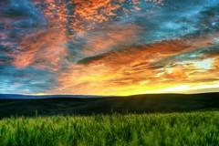 Here Comes The Sun! (explore) (Darrell Wyatt) Tags: sunrise wasco colorfulgreenwheat