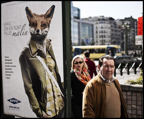 The foxy consultant