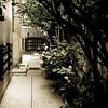 the alley that takes them home V (ion-bogdan dumitrescu) Tags: flowers trees home bike alley shade romania motor hydrangea bucharest hortensia bitzi ibdp mg31553157edit ibdpro wwwibdpro ionbogdandumitrescuphotography
