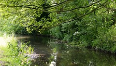 The Kent river. (Adam Swaine) Tags: trees england green english water beautiful leaves rural canon river landscape countryside kent village britain villages east riverbank waterside shoreham counties naturelovers darent adamswaine mostbeautifulpicturesmbppictures wwwadamswainecouk