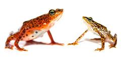 [フリー画像] 動物, 両生類, カエル, 201007041900