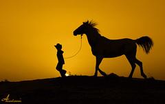 Hurry up  [ Explore #2 ] (ANOODONNA) Tags: 2 horse sun black silhouette yellow cowboy explore hurryup canonef2470mmf28lusm littlecowboy canoneos50d anoodonna العنودالرشيد alanoodalrasheed