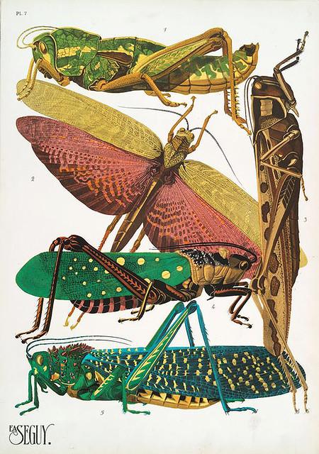 017-Insectes vingt planches en phototypie coloriées…1928- Eugene Alain Seguy