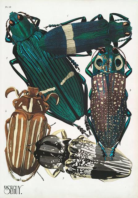 019-Insectes vingt planches en phototypie coloriées…1928- Eugene Alain Seguy