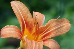 flower garden  117