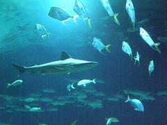 168.TiburónYPeces