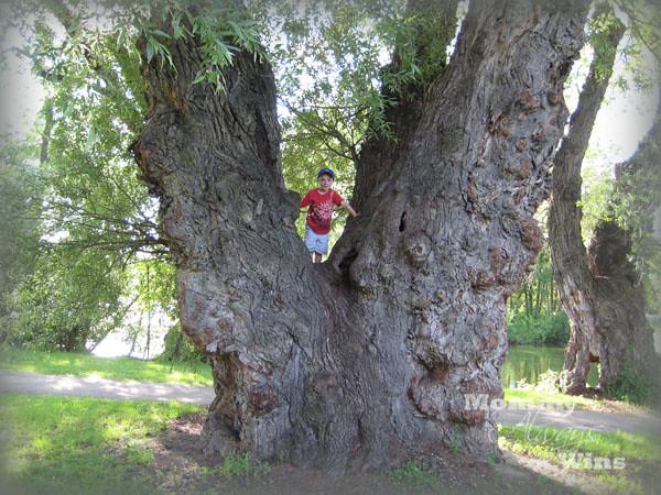 tree_nick2