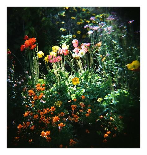 Rocha_Flowers