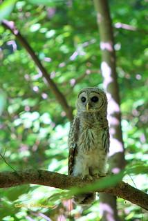 096-OWL 4