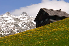 Idyllic retreat... (photoroberto) Tags: flowers blue vacation house snow mountains alps yellow clouds austria nikon view meadows highland vista hillside snowymountain winterwonderland grossglockner austrianalps dreamvacation highestpeak summerinthemountains snowandflowers crystalclearair