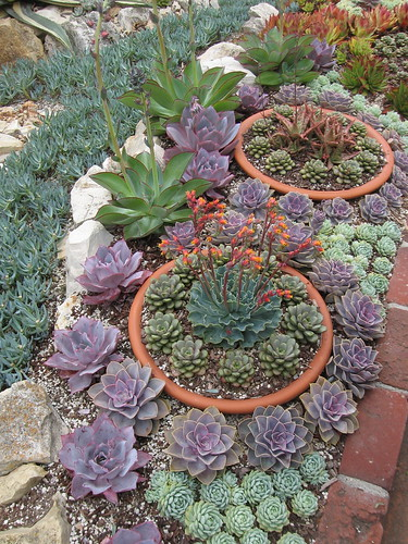 4 Gardens in 3  days: #3, the Sherman garden in Corona Del Mar.