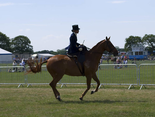 The Cheshire Show: Side Saddle