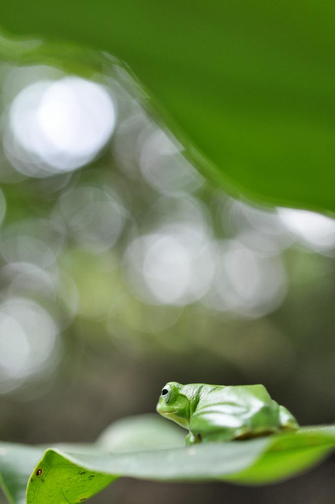 990713富陽公園隨拍  一片綠油油 卡~蛙~怡~