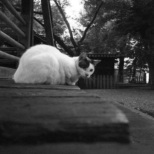 Today's Cat@2010-07-14