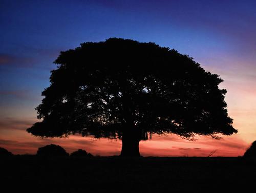 フリー写真素材, 自然・風景, 樹木, 夕日・夕焼け・日没,