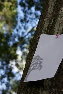 365: 75: Nature: Oak on Oak