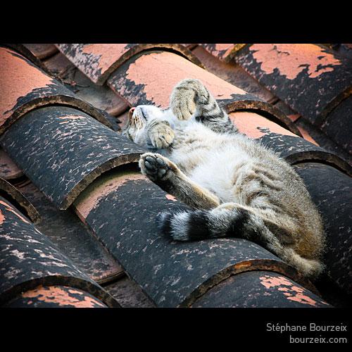 La dure vie du chat Niçois à l'heure de la sieste...