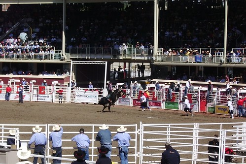 Bull Rider (Rodeo day 8, Pool B final)