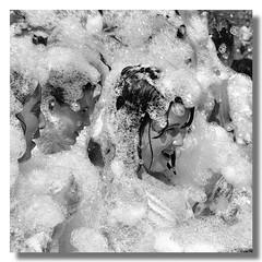 Nieve de verano (XOSI RA) Tags: ltytr1