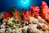 V.I.V.I.D (Lea's UW Photography) Tags: underwater redsea egypt unterwasser tiran tokina1017mm canon7d leamoser