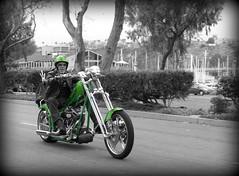 choppah ((CMC)) Tags: honda chopper motorcycles bikes harley triumph yamaha sportbike orangecounty ducati oc davidson calilfornia ortegahighway kawasaki bikers flickrgolfclub