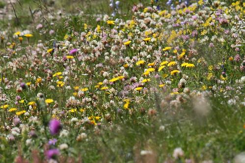 wildflowers 119