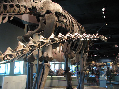 Rapetosaurus and Apatosaurus