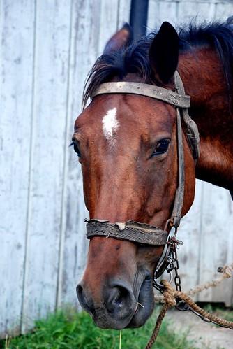 calul obraznic