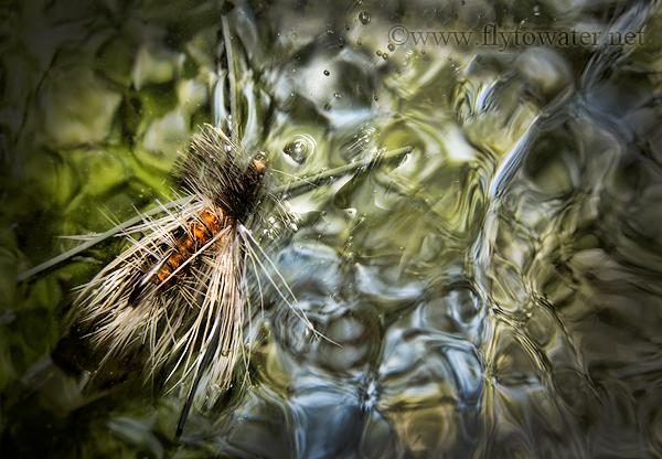 Drifting Stonefly