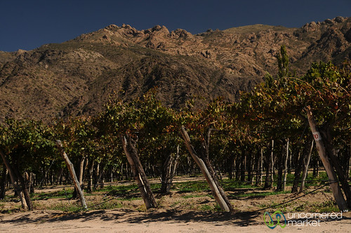 Cafayate Wine Region