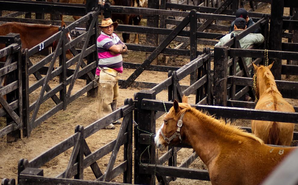 Un vaquero se encarga del cuidado de los caballos en el establo mientras se prepara una presentación de crías de las mejores razas. (Elton Núñez - Mariano Roque Alonso, Paraguay)