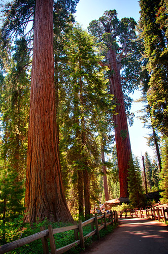 Sequoia National Park 11