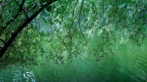 フリー写真素材, 自然・風景, 樹木, 川・河川, グリーン, ドイツ,