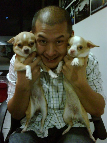 Raymond Phang and chihuahua