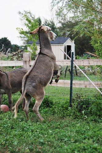 03_donkey_hop