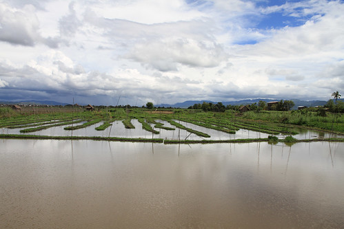 floating gardens Inle