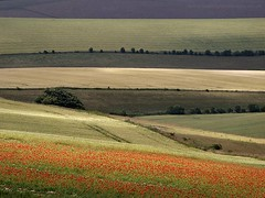 Poppies Field (Yaroslav Staniec) Tags: uk england colour walking photography countryside scenery unitedkingdom outdoor scenic hills poppies gb leisure eastsussex southdowns poppiesfield yaroslavstaniec