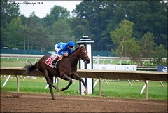 Erin Rose (Five Furlongs) Tags: horses horse racetrack race bay newjersey track nj racing monmouth horseracing thoroughbred kriss thoroughbreds gallop filly haskell erinrose purge monmouthpark oceanport joebravo jeweloftheeast haskellinvitational christopheclement waterfordstables