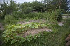 gobcobatron garden