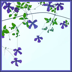 Clematis (judy_and_ed) Tags: clematis pointroberts rossparknet