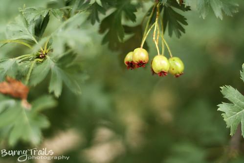 215-berries