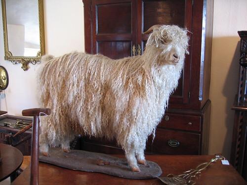 Stuffed angora goat
