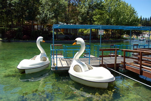Swan pedal boats