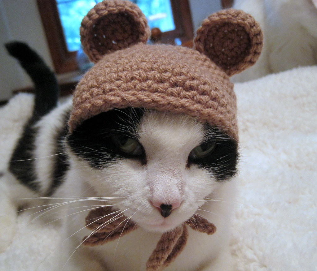 Pet Hat- Bear Beanie- Cat Hat- Photo Prop- Taupe
