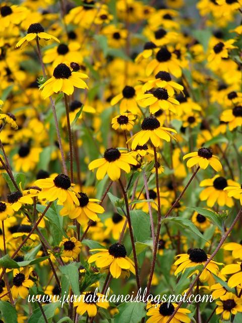 "flori in curtea bisericii ""mele"""