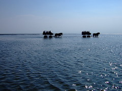 in the mudflat (marfis75) Tags: blue sea horses horse germany landscape deutschland see wadden coach wasser carriage mud duo hamburg kutsche norden creative commons insel cc creativecommons hh blau nordsee pferd due zwei watt mudflat cuxhaven wattenmeer tideland waddensea kutscher neuwerk kutschenfahrt curricle salzwasser marfis marfis75 marfis75onflickr wattfahrt