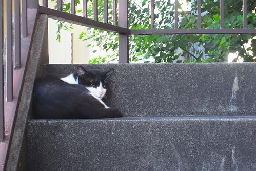 Today's Cat@2010-08-09